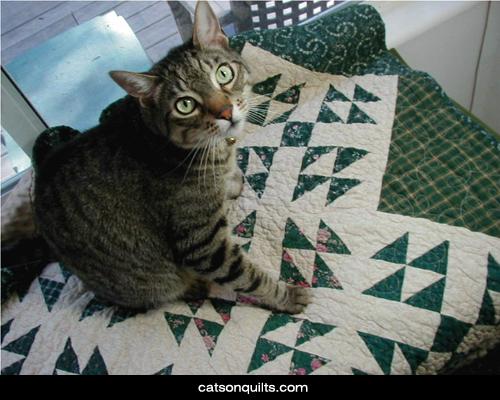Cat wee on duvet